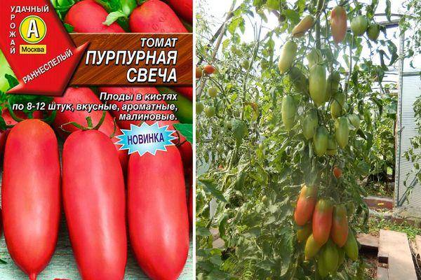 ✅ томаты алые свечи описание и фото - питомник46.рф