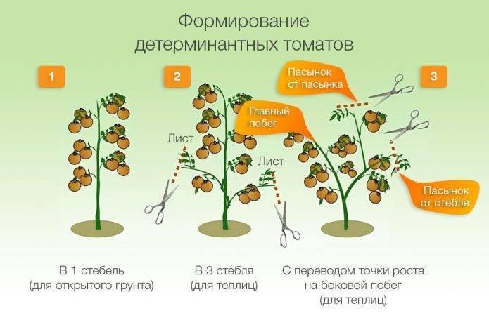 Когда и как высаживать рассаду перца в открытый грунт и теплицу: сроки и правила высадки