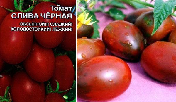 Как вырастить хорошие помидоры сорта «столыпин»