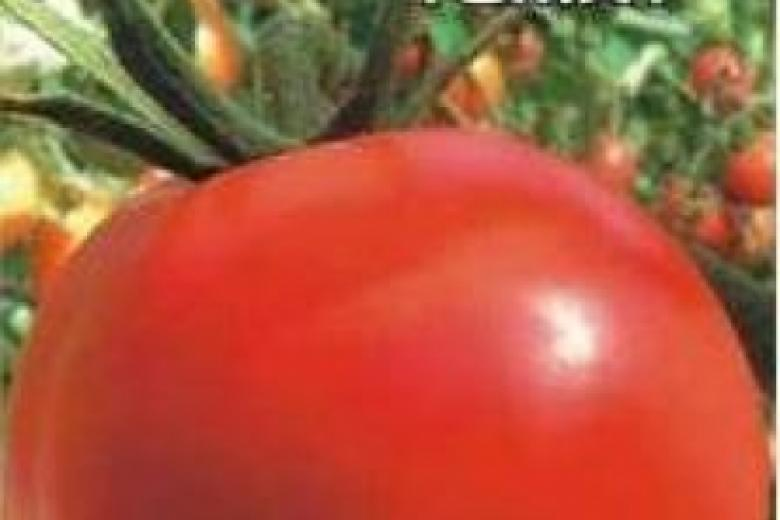 Детерминантные помидоры и индетерминантные томаты: особенности и правила формирования томатов (95 фото и видео)