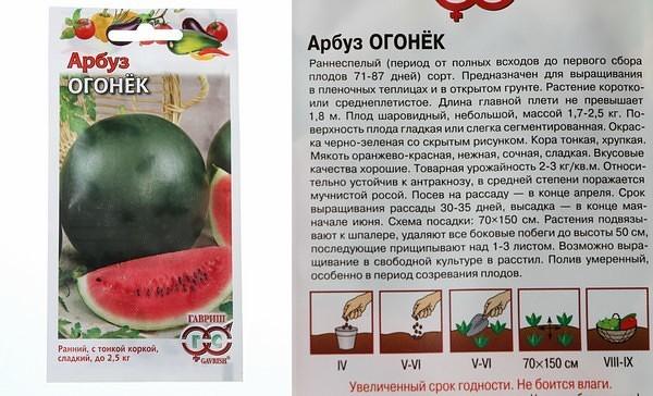 Характеристики и описание арбуза сорта Огонек, выращивание в открытом грунте