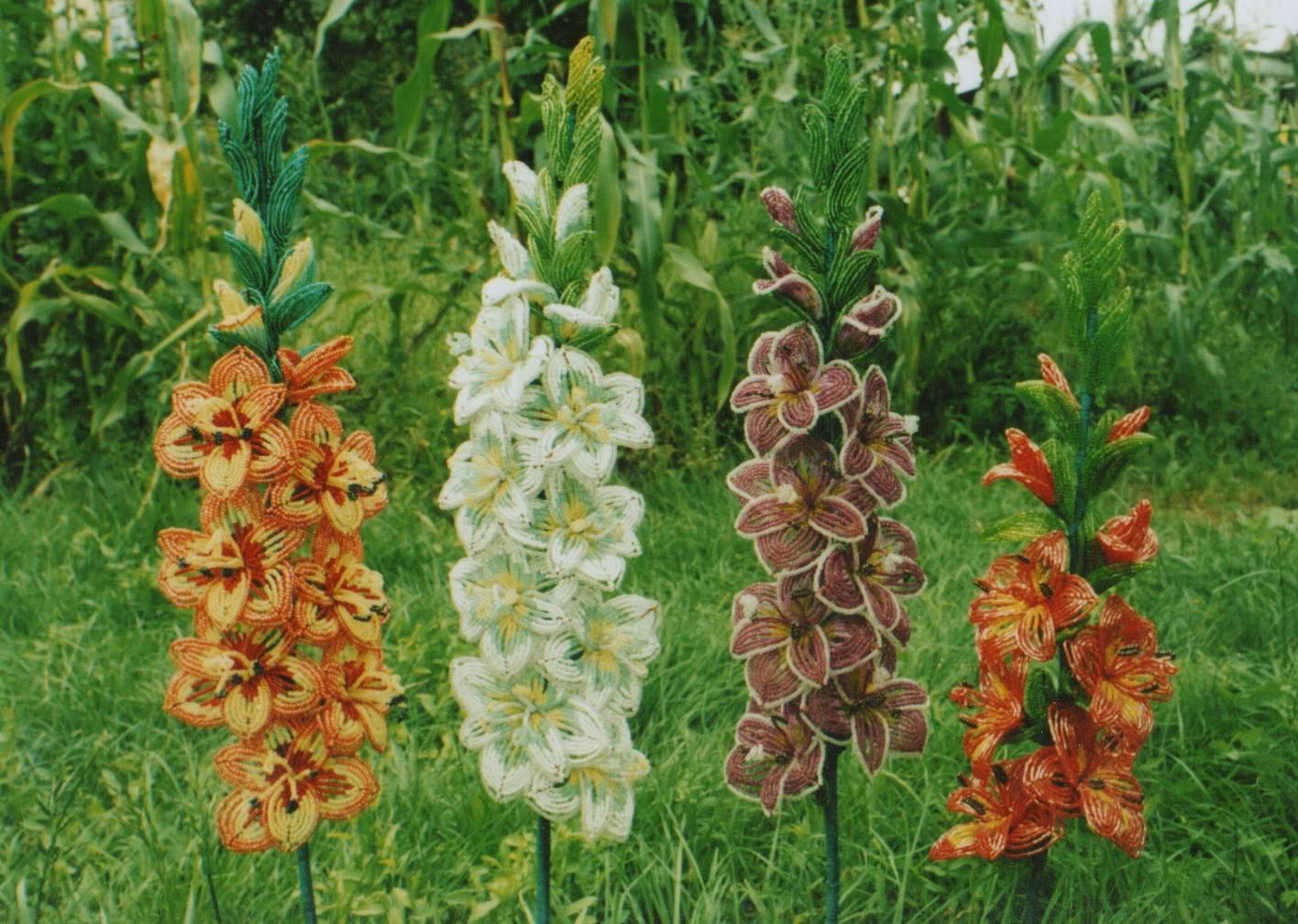 Гладиолус - 66 фото основных видов требовательного к почве цветка