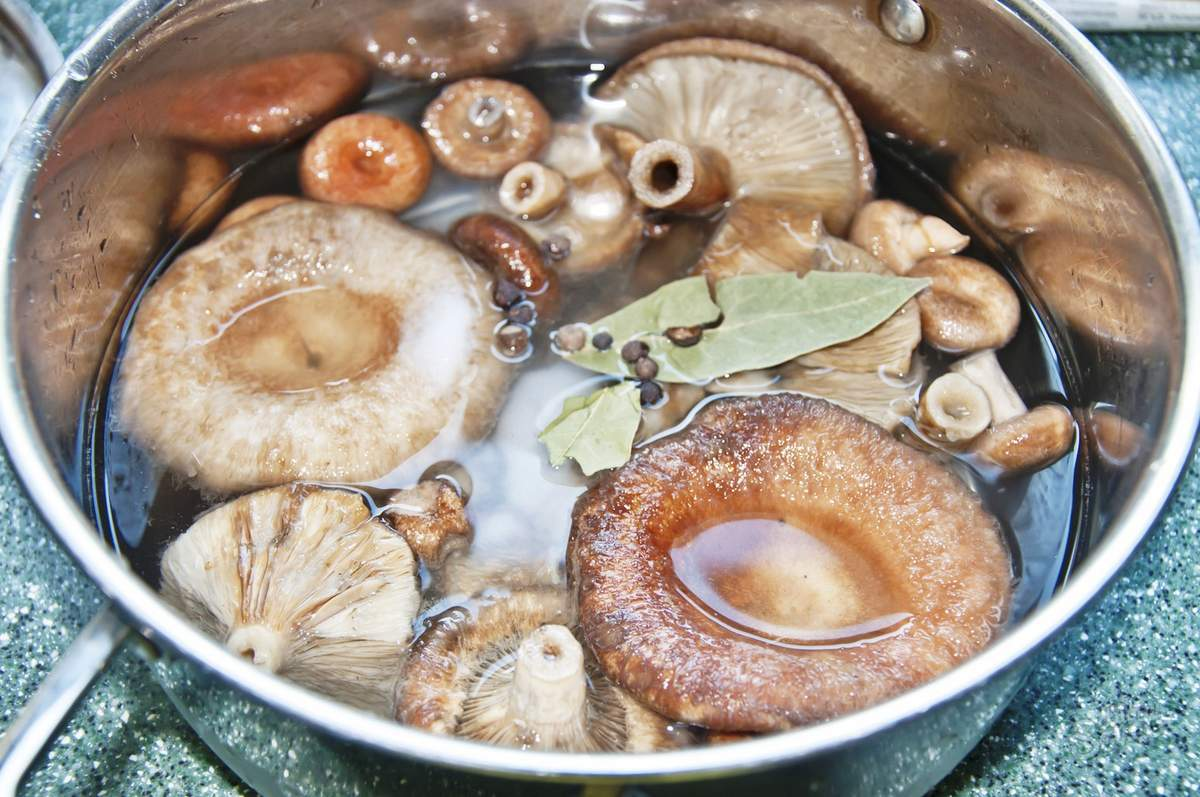 Как солить грузди скрипуны горячим и холодным способом, топ 5 рецептов на зиму в банках