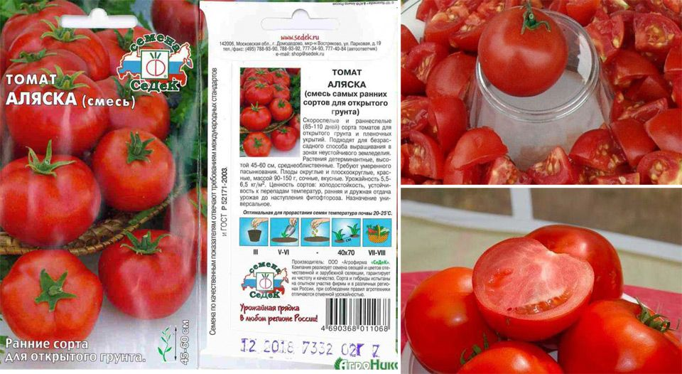 Томат аляска: характеристика и описание сорта марки гавришь, фото и отзывы тех кто сажал о выращивании помидоров из семян