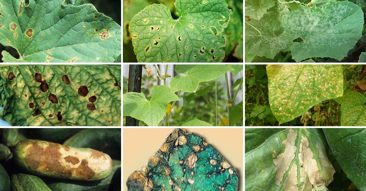 Вредители рассады – 54 фото и обзор самых основных и опасных представителей для флоры