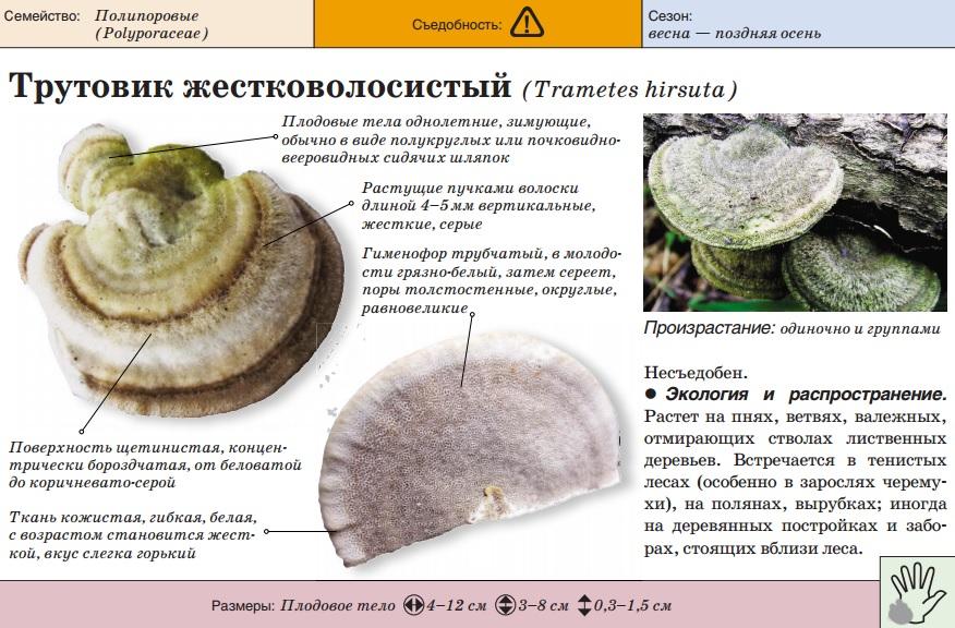 Лечебные свойства грибов - уральский центр фунготерапии ирины филипповой