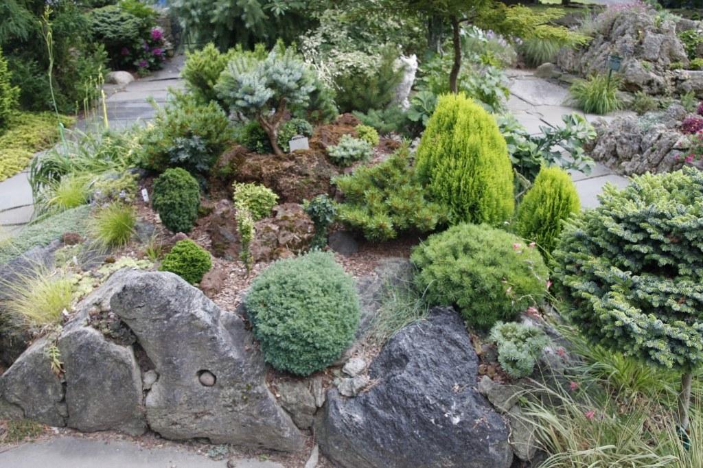 Декоративные кустарники: сорта, советы по выбору и уходу