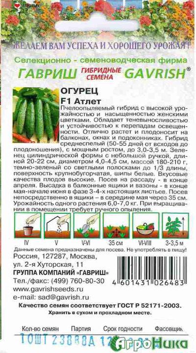 Огурец атлет: характеристика и описание сорта, урожайность с фото