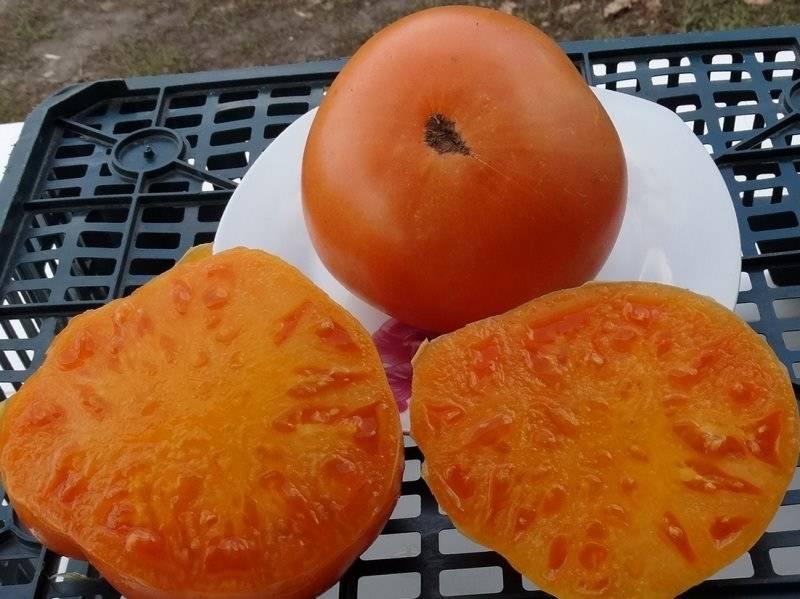 Особенности выращивания и ухода за томатом «бизон черный»