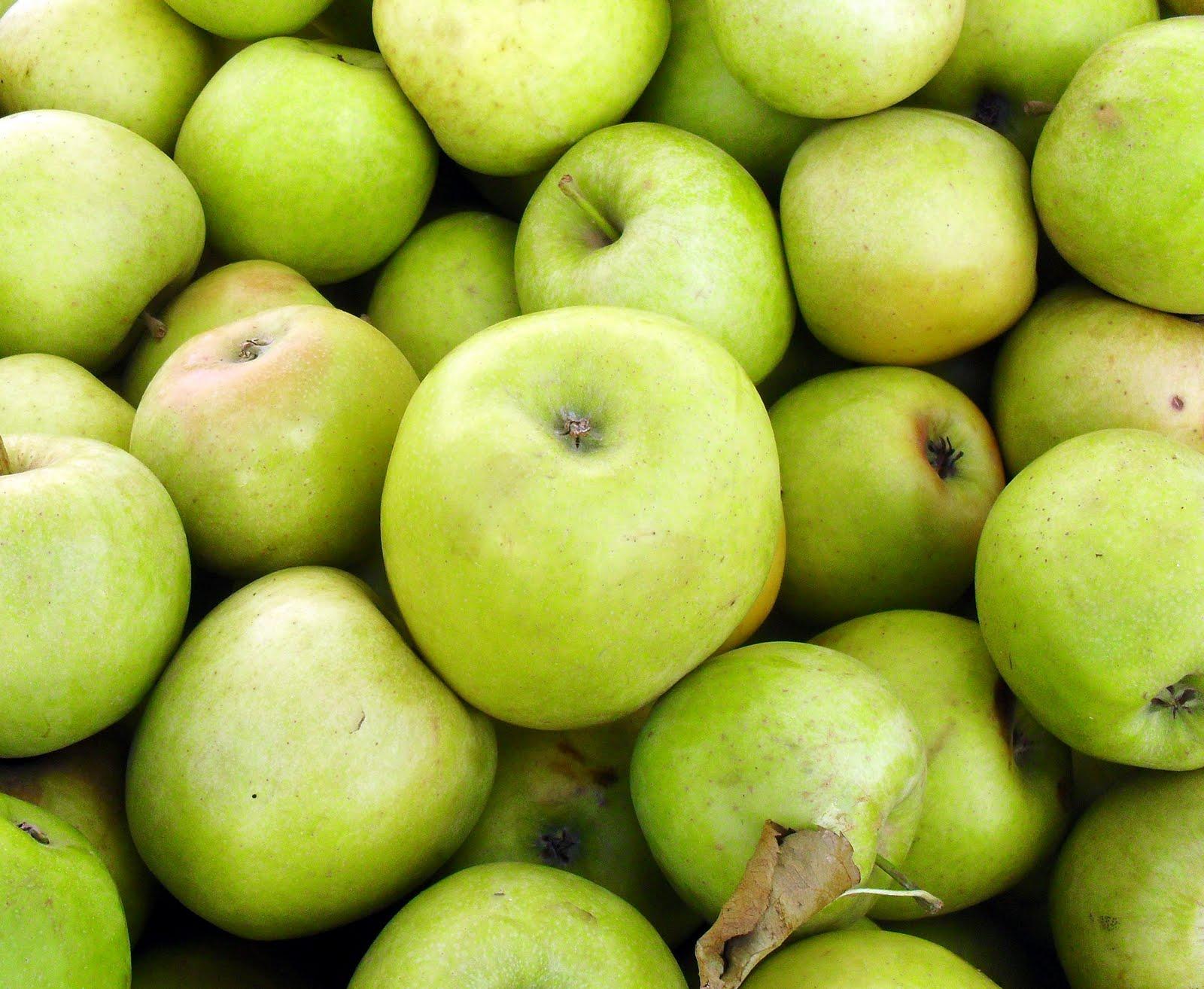 Описание сорта яблони хоней крисп: фото яблок, важные характеристики, урожайность с дерева
