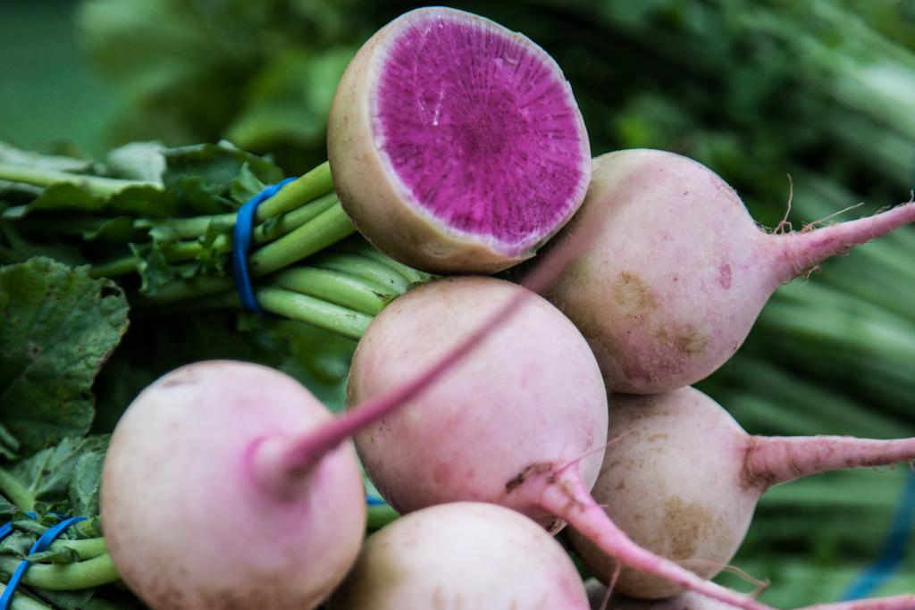 Редька: выращивание и уход в открытом грунте, болезни и вредители