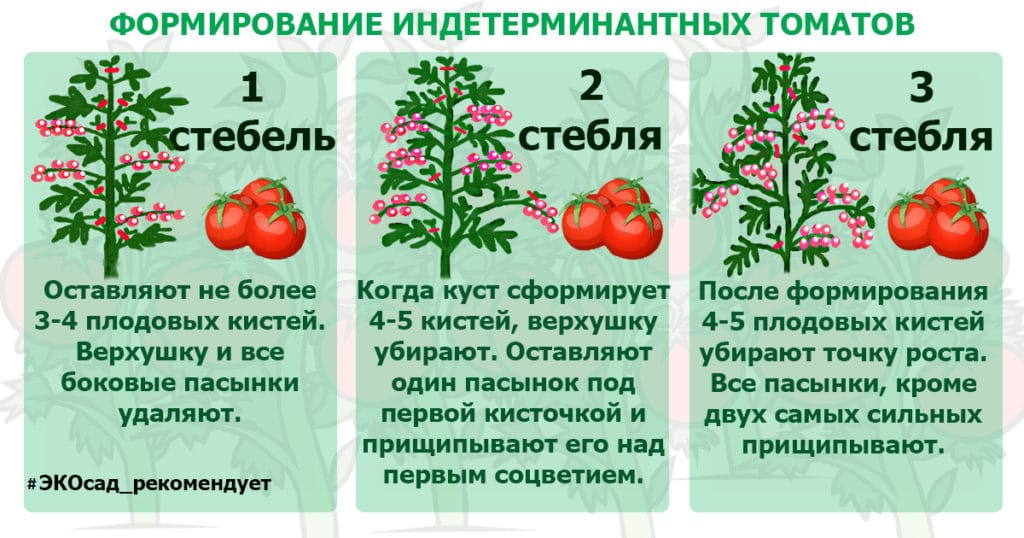 Характеристика 8 видов детерминантного сорта томатов: что это такое, и как овощеводу получить желаемый урожай?