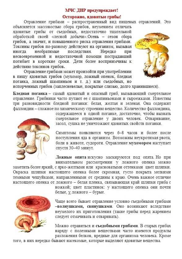 Цезарский гриб - фото и подробное описание свойств