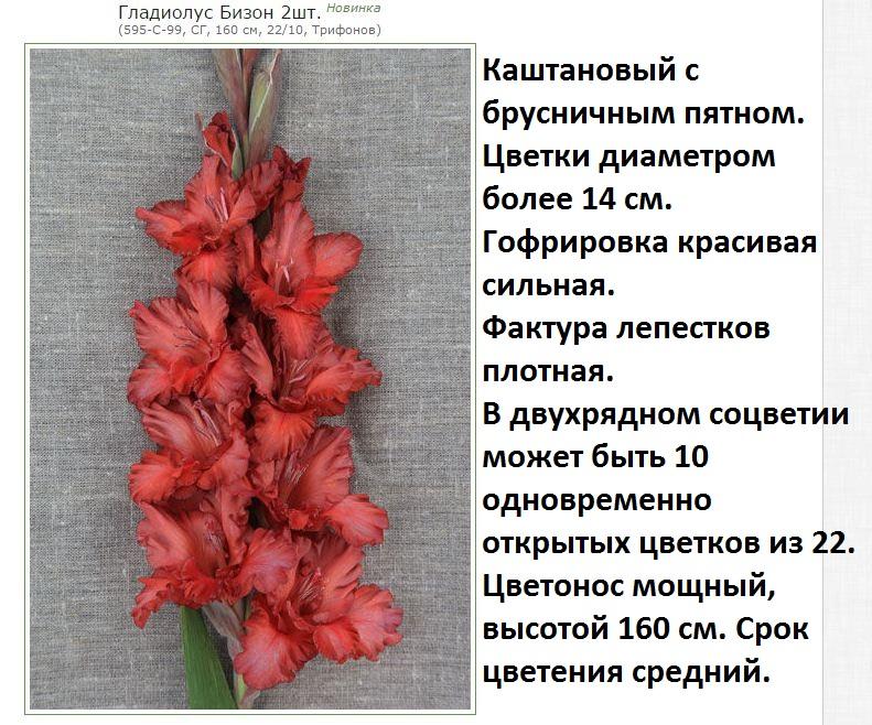 Гладиолусы не цветут, не выпускают стрелку, не распускаются бутоны, быстро отцветают: причины, что делать
