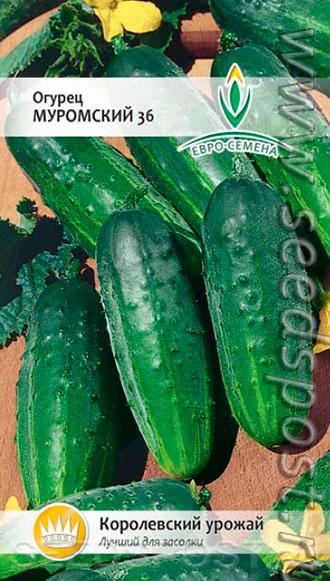 Огурцы амур f1: описание, отзывы, характеристика сорта, фото