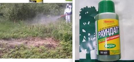 Как избавиться от сорняков на газоне: гербициды сплошного и избирательного действия