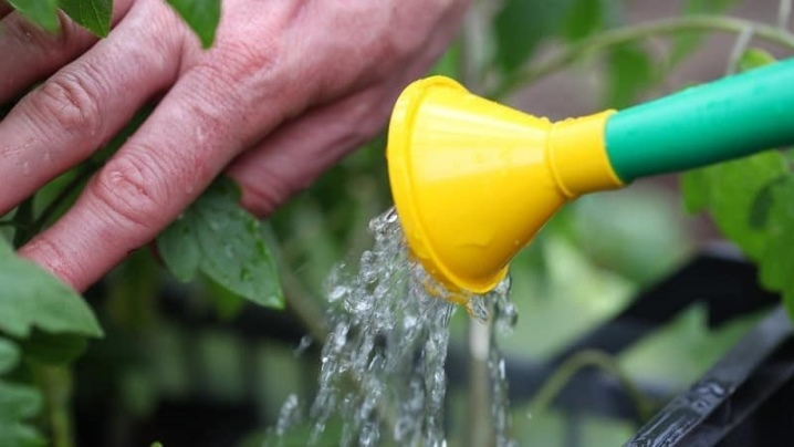 Полив тыквы в открытом грунте. как часто поливать?
