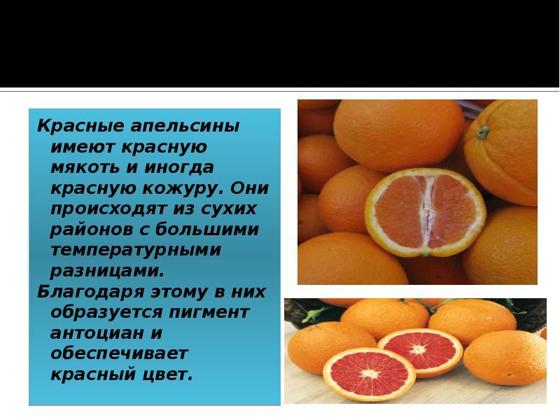 Апельсины для похудения и не только: польза и вред