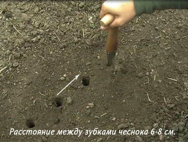 Как правильно сажать горох в открытый грунт: подготовка, выбор места, уход