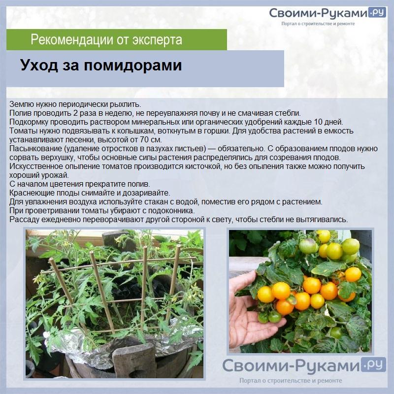 Лучшие сорта томатов для открытого грунта в сибири