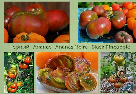Томат ананас черный: характеристика, описание сорта с фото и видео, отзывы, урожайность