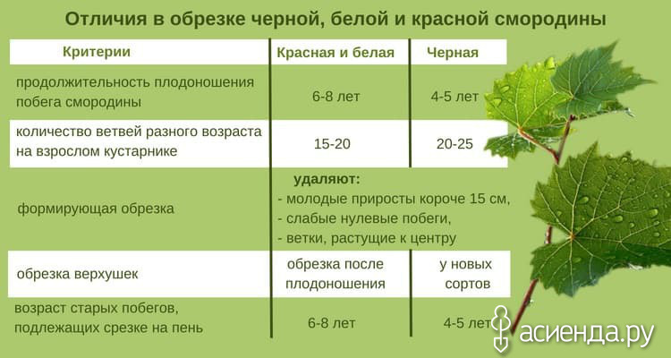 Особенности посадки, полива и подкормки винограда весной и летом