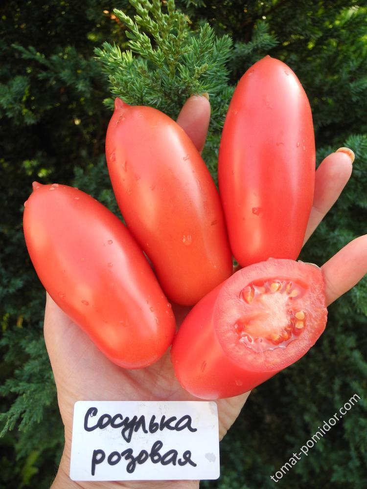 Томат сосулька розовая: описание, отзывы, фото, урожайность | tomatland.ru