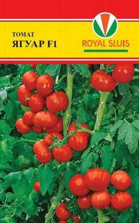 Голландские сорта томатов: описание, фото, отзывы   дача