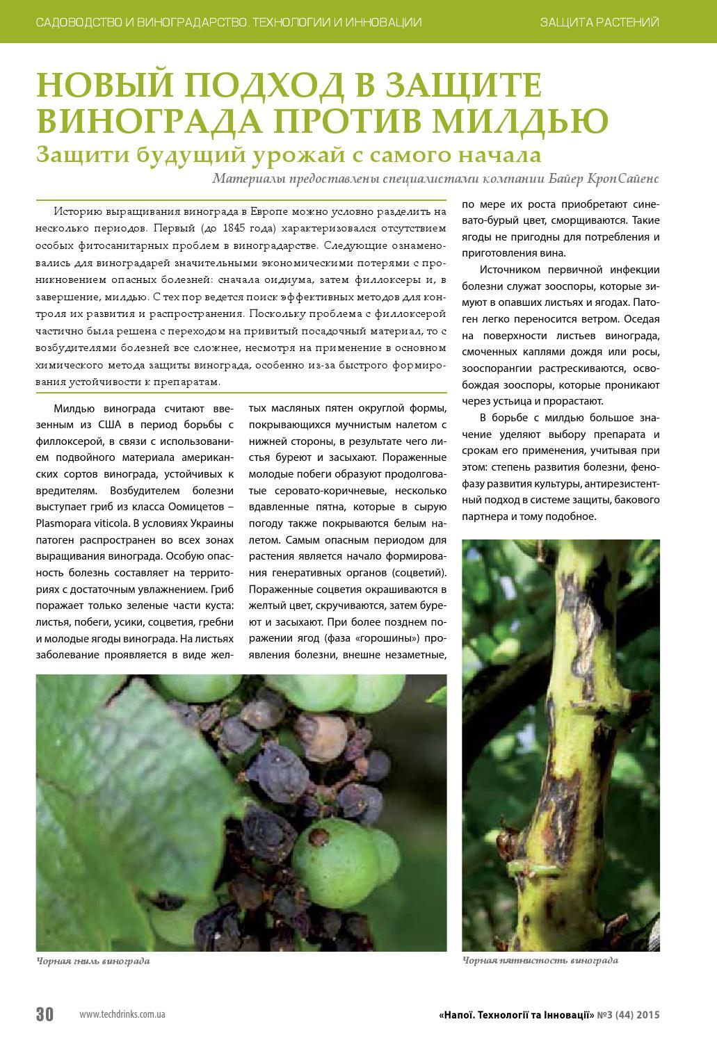 Вредители винограда, филлоксера