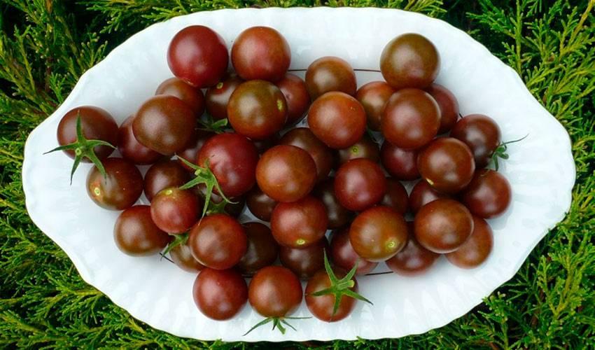 Лучшие сорта черных помидоров с фото и описанием