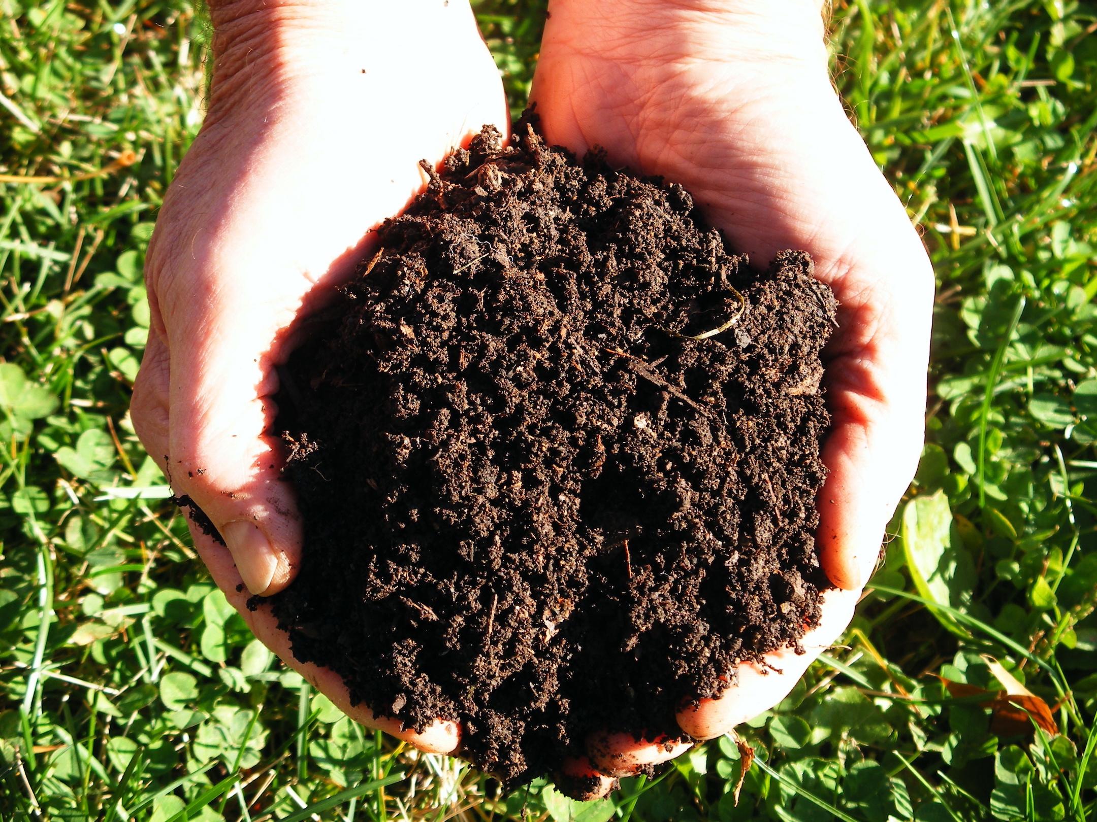 Лучшее удобрение для картофеля при посадке в лунку на 2021 год