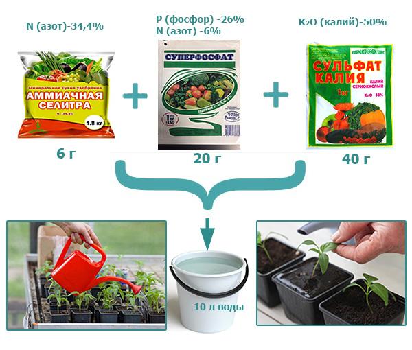 Как и чем подкормить рассаду помидоров: сроки, удобрения, схемы