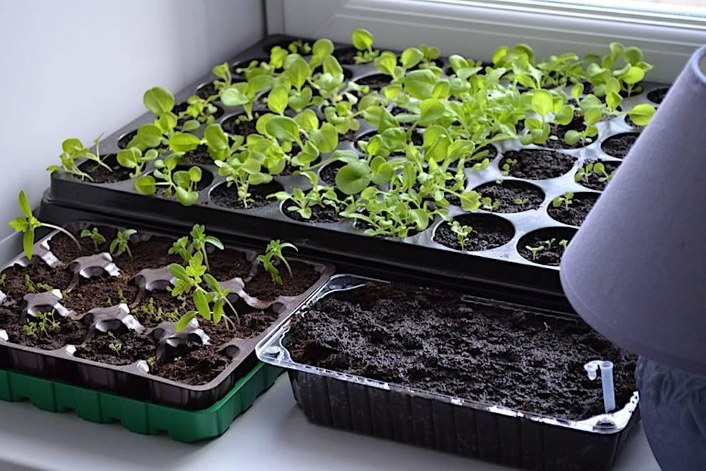 Кресс-салат: выращивание на огороде и дома