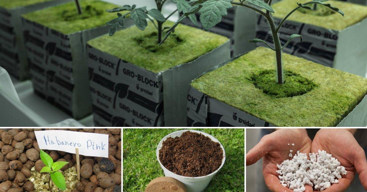 Грунты для рассады: что добавить, чтобы получить идеальный грунт для рассады цветов и овощей?