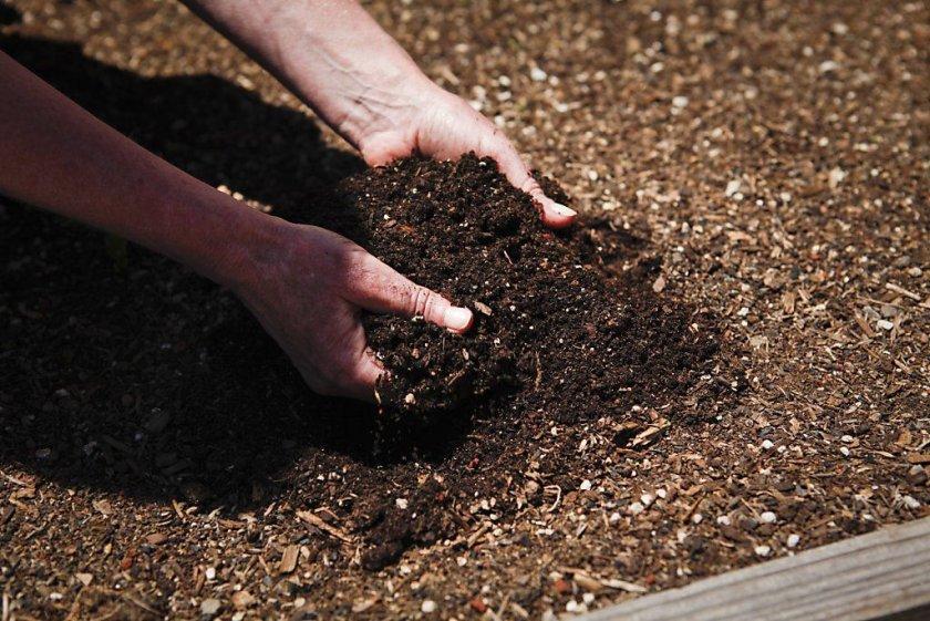 Удобрения для лилий при посадке и почвы для выращивания