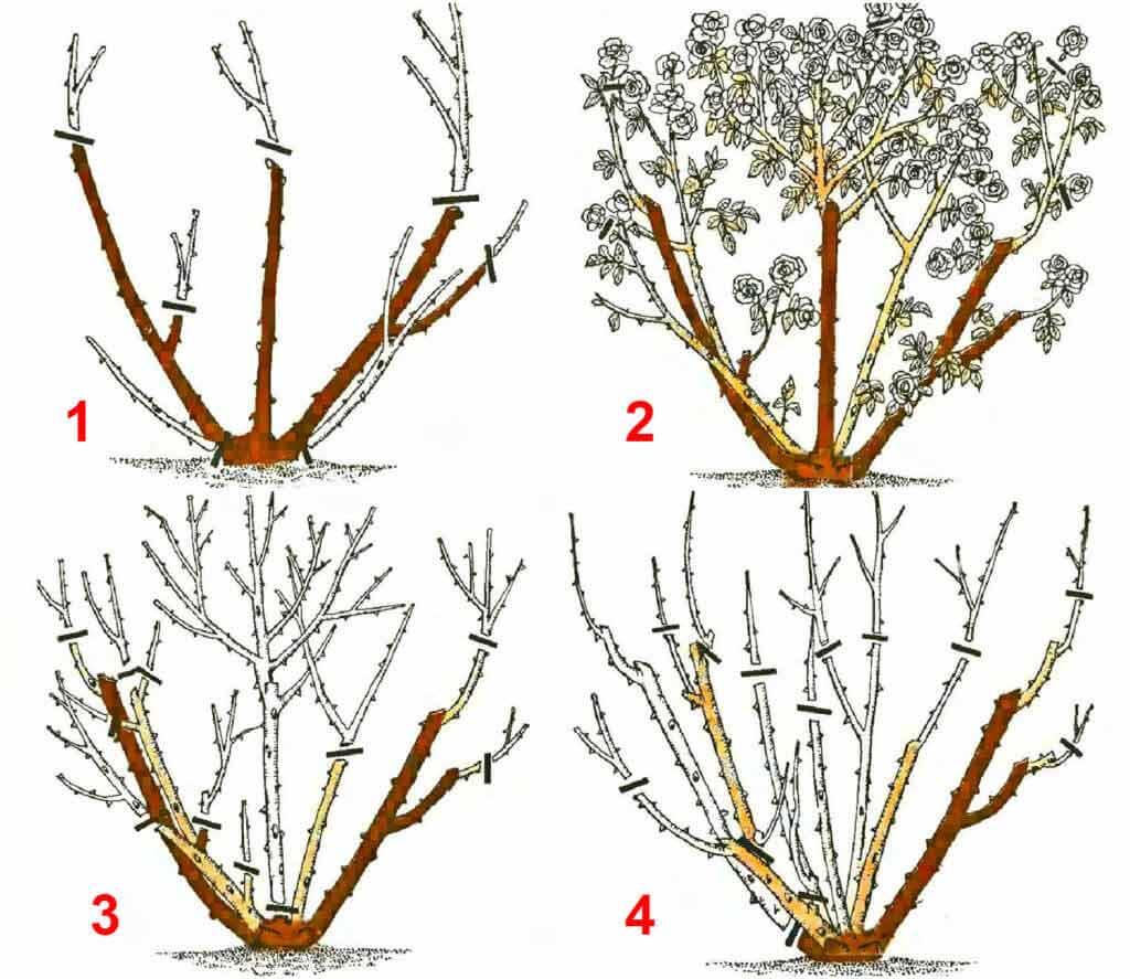 Уход за розами осенью и подготовка к зиме: обрезка, подкормка, укрытие