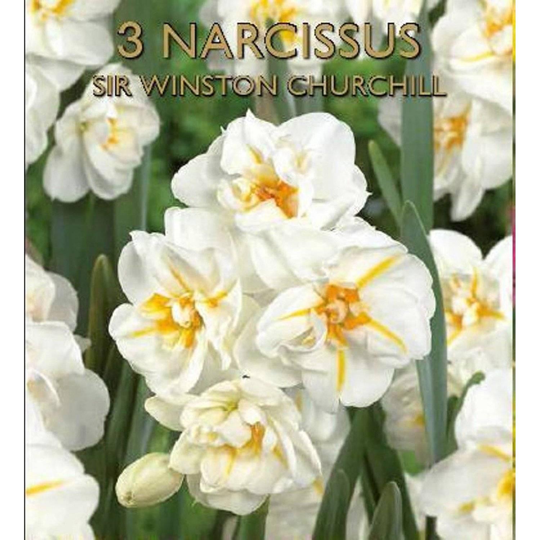 Описание и характеристика нарцисса сорта вальц, посадка и уход