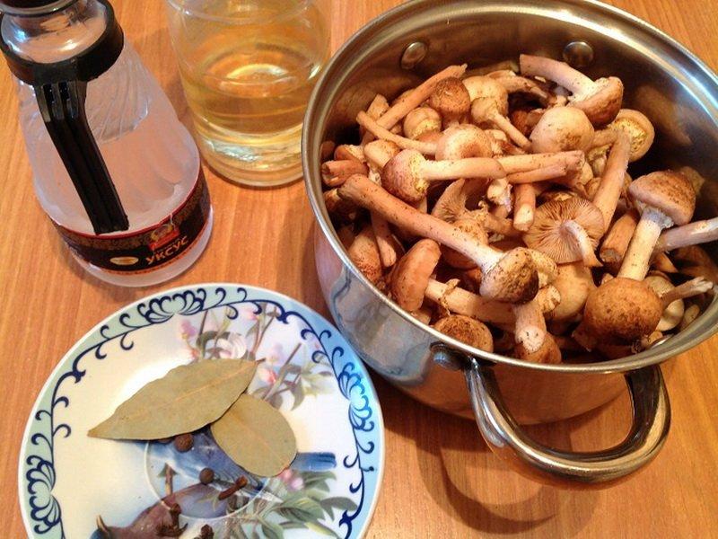Опята, маринованные в банках: простые и вкусные рецепты приготовления на зиму в домашних условиях