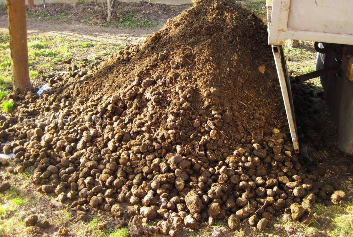 Как применять конский экстракт и другой жидкий навоз в качестве удобрения в огороде?