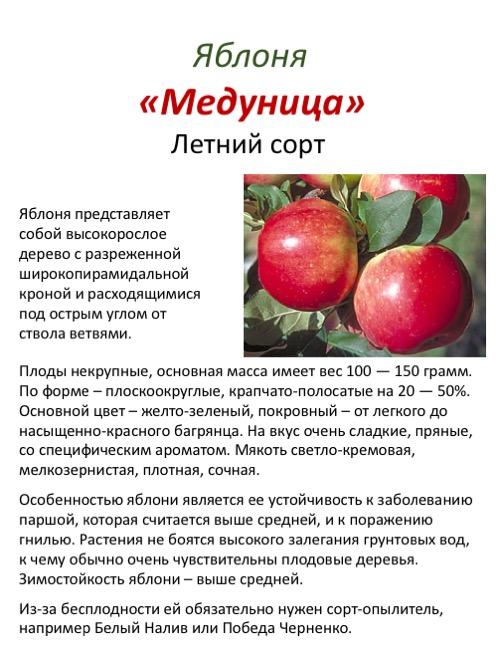 Яблоня. посадка, размножение, уход, сорта, фото на supersadovnik.ru