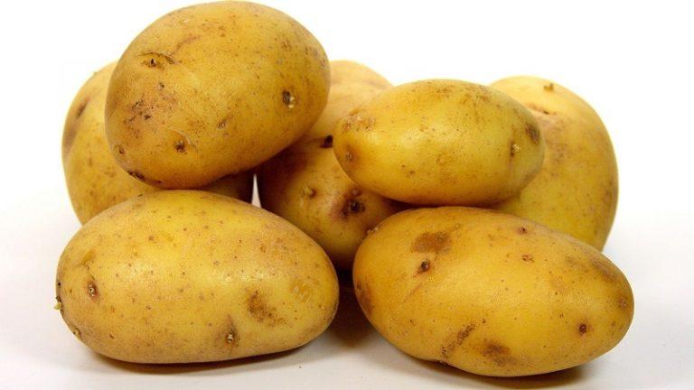 Описание сорта картофеля зекура: характеристики, особенности выращивания и хранения