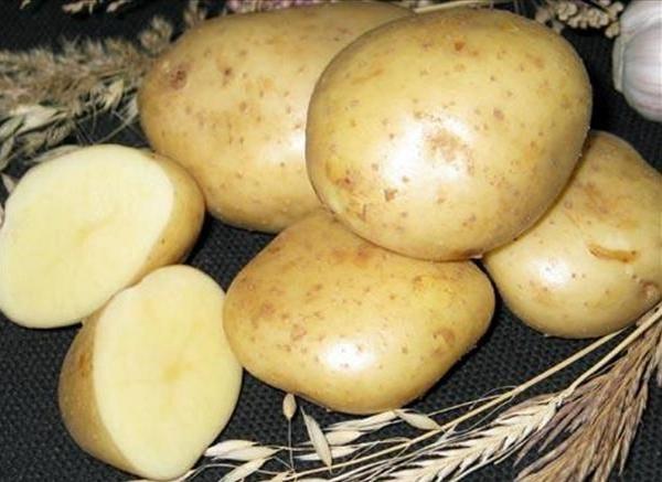 Картофель тимо (тимо ханкиян): описание, фото, урожайность, характеристики сорта, посадка и уход