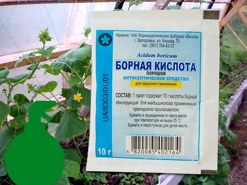 Как правильно подкормить капусту борной кислотой