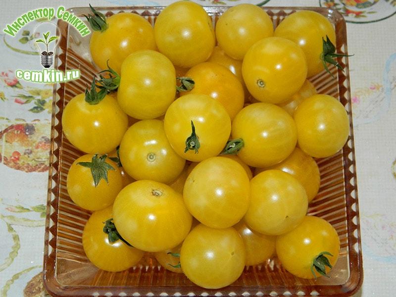 Описание балконного томата Жемчужина желтая и агротехнические правила выращивания