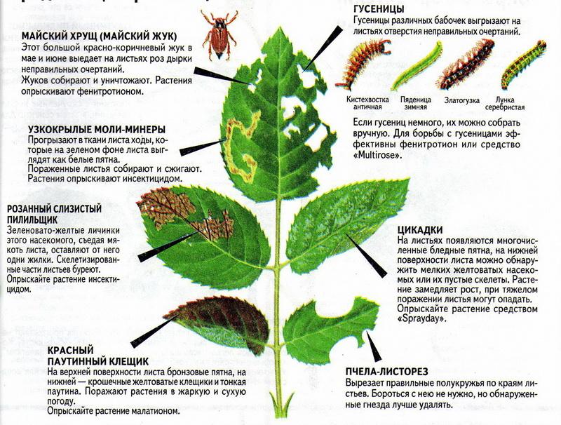 Болезни и вредители растений / асиенда.ру