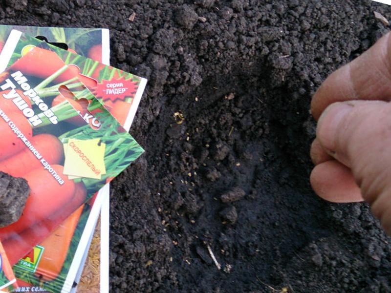 Посадка моркови осенью под зиму: выбор сорта и подготовка грядок, видео и фото