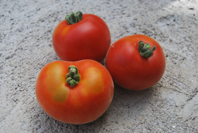 Все о томате марманде: как выглядит, характеристики и описание сорта
