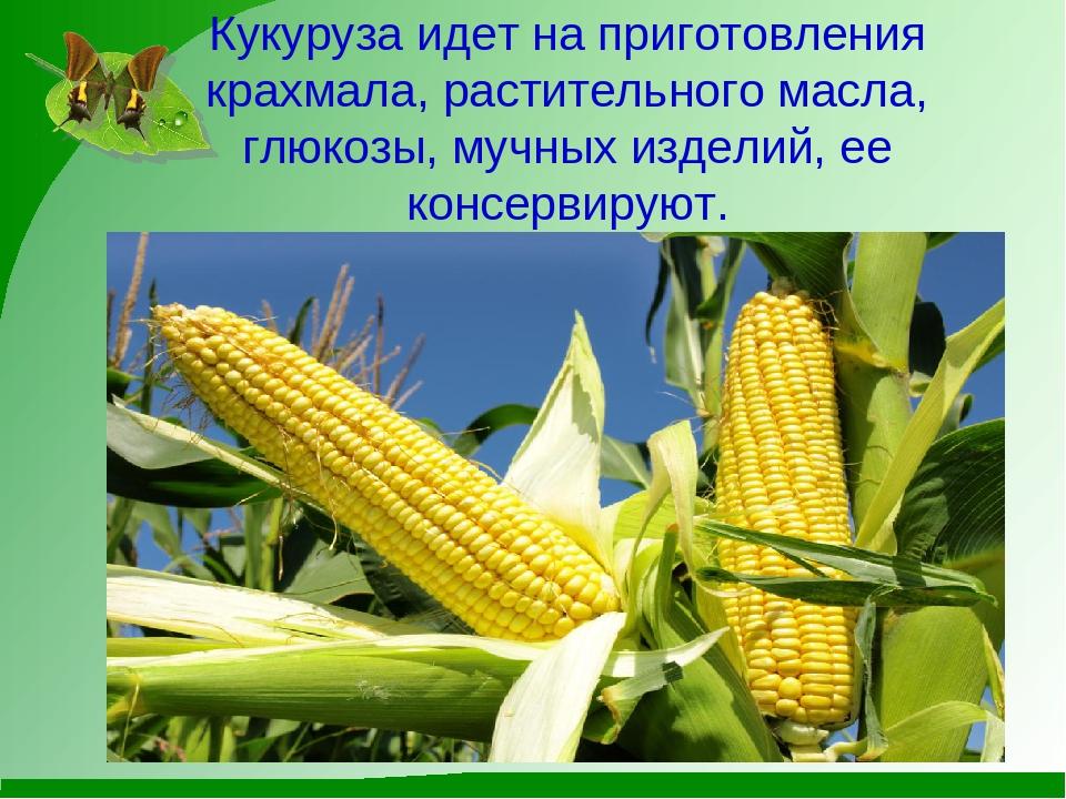 Что такое кукуруза — это овощ, фрукт, ягода, зерно или бобовые?