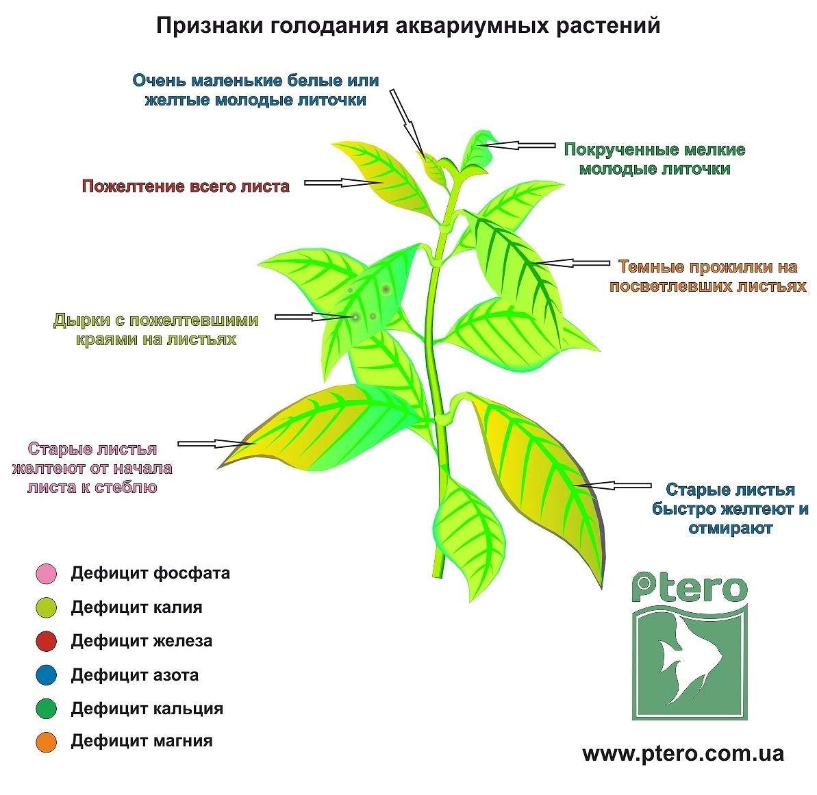 Желтеют листья у перца: причины, что делать, эффективные средства