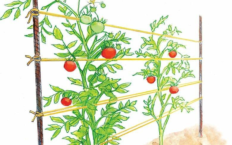 Шпалеры для помидоров: особенности изготовления своими руками